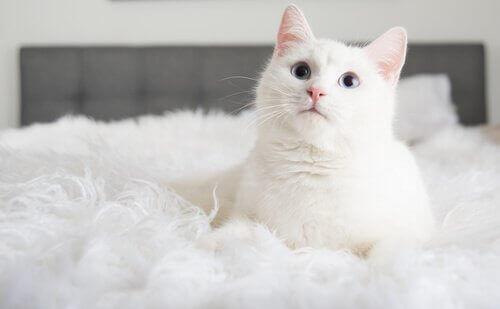Kedi Sahiplenmek: Size Öğrettiği 3 Şey