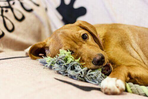 bitki kemiren köpek