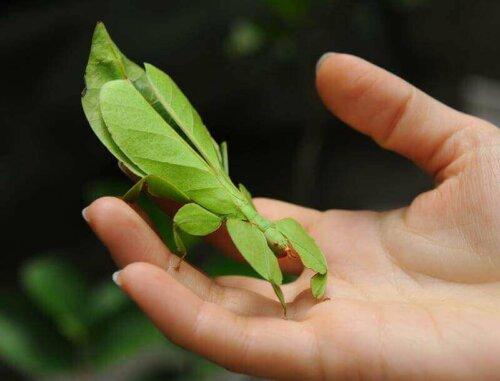 Böceklerde Kamuflaj: Usta Kamuflajcılar