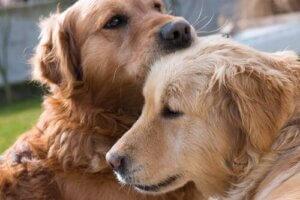 Üzgün iki köpek