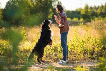 Köpek Eğitimi Hedefleri ve Komutları