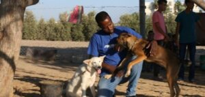 Gazze Köpekleri Yaşamak İçin Yeni Bir Yuva Buldu