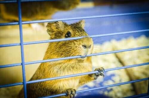 hamster çubuk kafes