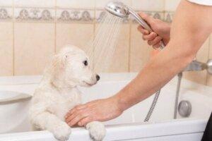 Evcil hayvanınızın tüylerini nasıl boyamalı