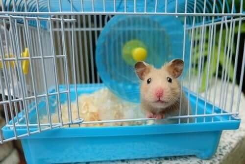 kapısı açık kafes hamster