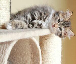 Kulesini tırmalayan bir kedi