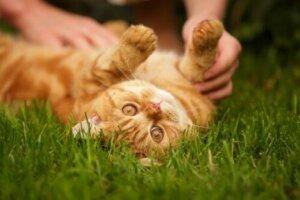 Sahibiyle oynayan bir kedi