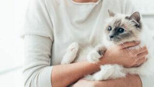Sahibinin kollarında kedi