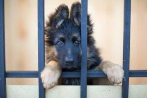 Kafeste bir köpek