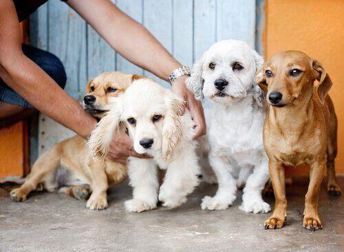 Para Gerçekten Bir Köpeği Satın Alabilir Mi?