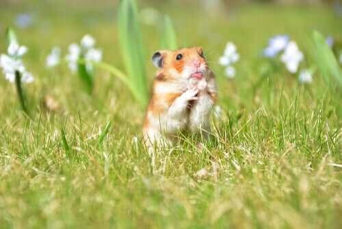 Küçük Hayvanlar İçin Mükemmel Ev Nasıl Yaratılır?