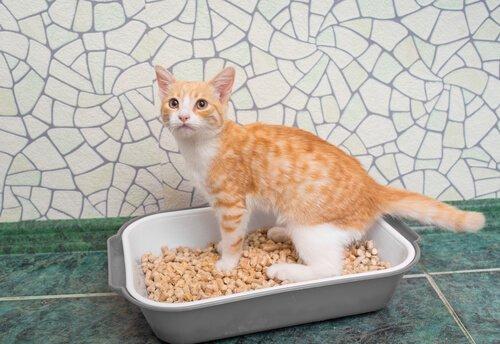 küçük kum kabında duran kedi