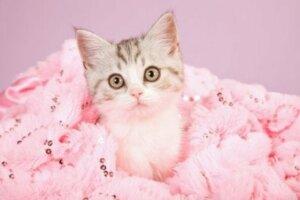 Tüyleri boyanmış bir kedi