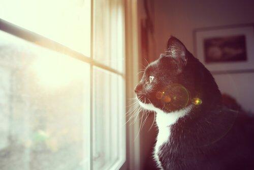 Kedinizin Sağır Olduğunu Anlamanın 7 Yolu