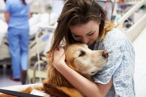 Hayat Kurtaran Tıbbi Müdahale Köpekleri