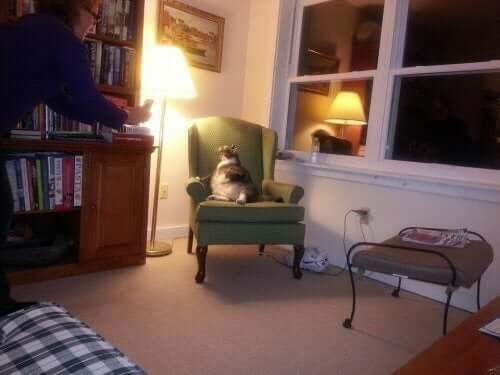Dünyanın En Şişman Kedisi Bir Otelde Yaşıyor