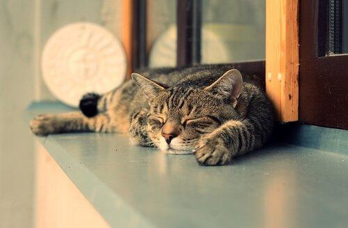 Kedilerin Sabahları Daha Fazla Uyumasının 7 Sebebi