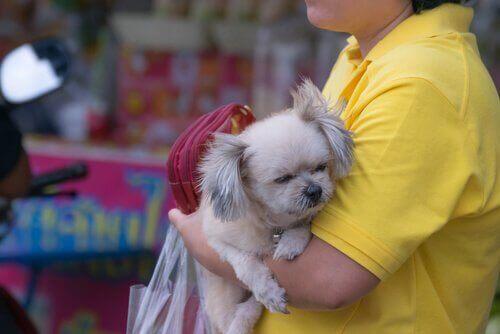 Caracas'ta Köpek Satan Yasa Dışı Pet Shoplar
