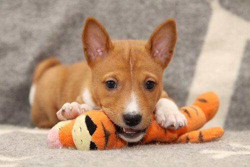 Büyük Tartışma: Köpekler Prozac Kullanmalı Mı?