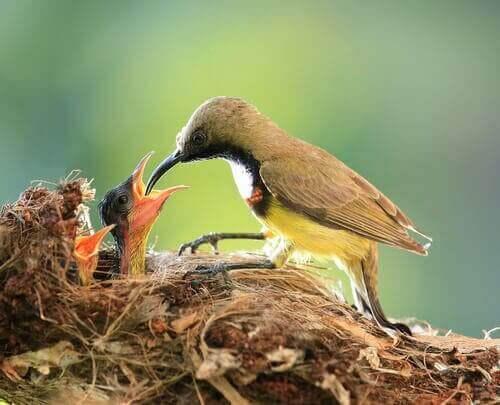 kuşlarda ebeveyn bakımı