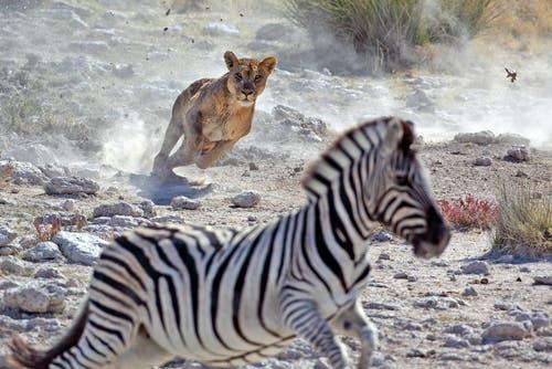 Hayvanlar Aleminde Doğal Seçilim ve Adaptasyon