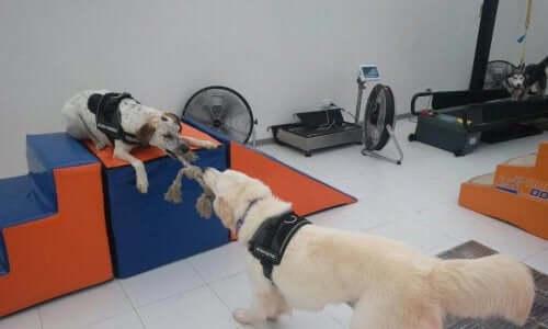 Body Dog: İlk Köpek Spor Salonu