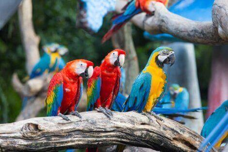 amerika papağanı ailesi