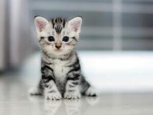 Küçük beyaz kedi yavrusu