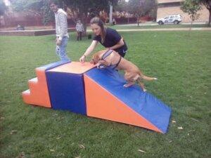 Body Dog spor salonunun bahçesi