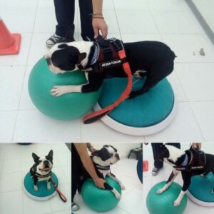 Body Dog salonunda bir köpek