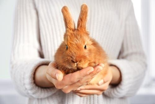 Hayvanların korunmasına dair düzenleme