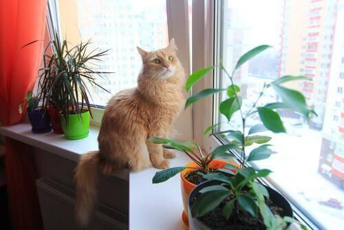 Kedinizin Evde Güvende Olduğuna Emin Olmak İçin İpuçları