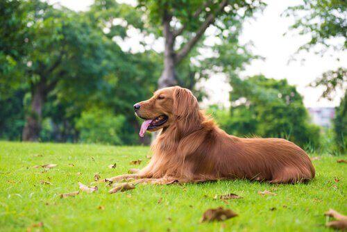 Büyük Köpek Cinslerine Nasıl Bakılır?