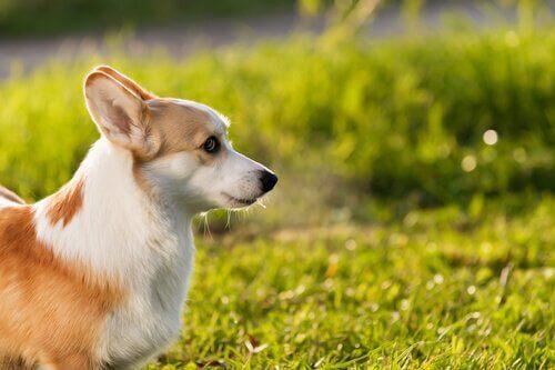 Evcil Hayvan Sağlığı: Hayvanlar Güneşte Yanabilir Mi?
