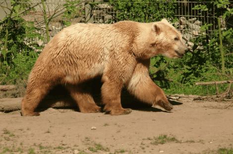 hayvanlarda melezlik