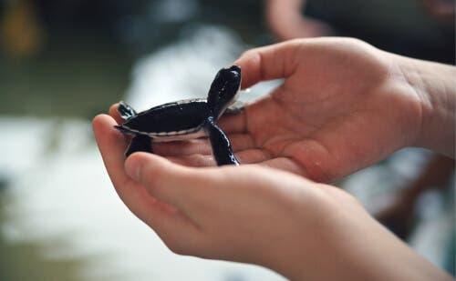 Kurtarılan Hayvanlarda Basımlama