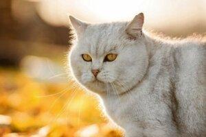 Tüylü bir kedi