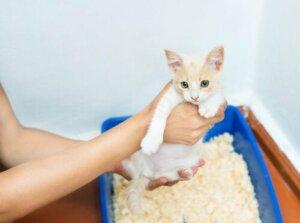 Kedi kumunda bir kedi