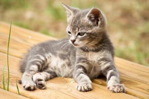 Kediniz İçin 14 Yaratıcı İsim