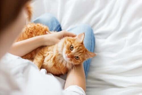Kedinizi Daha Sosyal Hale Getirmek İçin 3 İpucu