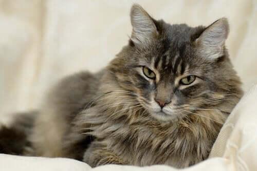 Kedinizin Tüyleri Hakkında Her Şeyi Öğrenin
