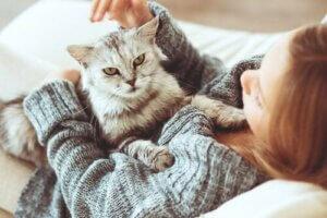 Kedisiyle oynayan bir kadın