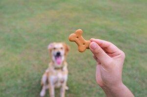 Ödül mamasına bakan köpek