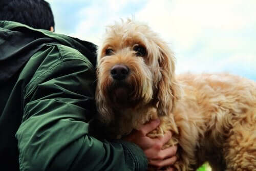 Köpek İle İnsan Arasındaki Dostluğun Sırları
