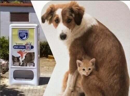 Dünyanın Farklı Noktalarında Köpekler İçin Mama Otomatları
