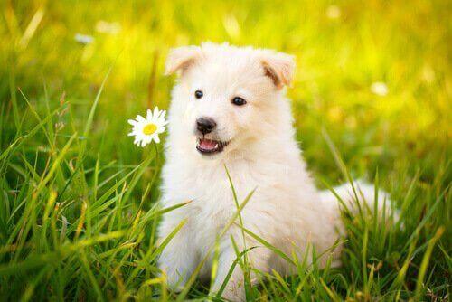 Köpekler Hakkında Bayılacağınız En İyi Sözler