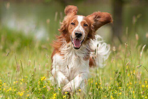 Köpeğinizi Mutlu Etmek İçin Bazı Öneriler