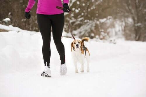Lassie Etkisi: Köpeğiniz Formda Kalmanıza Yardım Edebilir