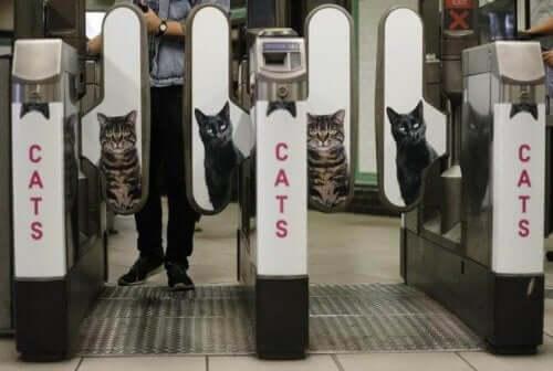 Londra Metrosunda Kediler İçin Reklamlar