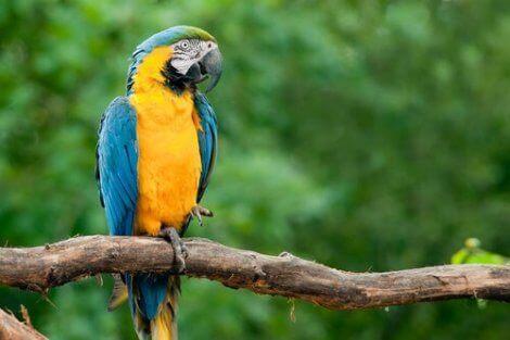 ağaç dalında oturan papağan